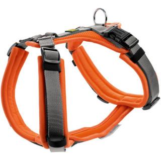 Geschirr Maldon M, orange/grau